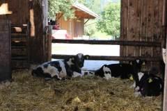 Urlaub-am-Bauernhof-Ferienhof-Knirsch-Pyhrn-Priel-36